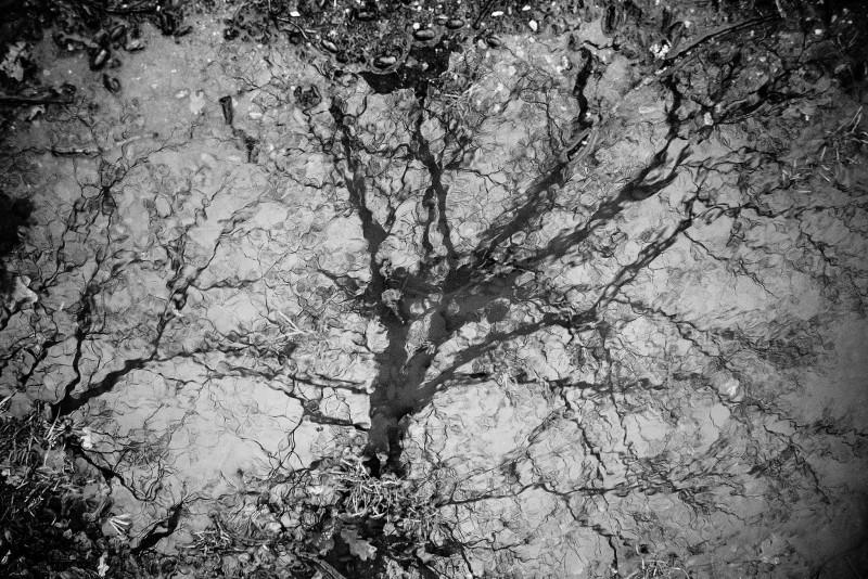 abstrakter Baum in S/W